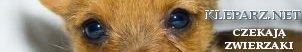 Promocja Search Results | Sklep z przywielejami Koty, koteczki, adopcje kotów, karam dla kotów, dla kotów, Kuchnia, przepisy, gastronomia ,loklae, warszawa, KRaków , Tłumacz niemieckiego , szkoła jezyków obcych Kraków e-learing, tłumaczenia niemiecki Kazania i homilie